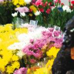 ⑦ 花と緑 緑ヶ丘園芸